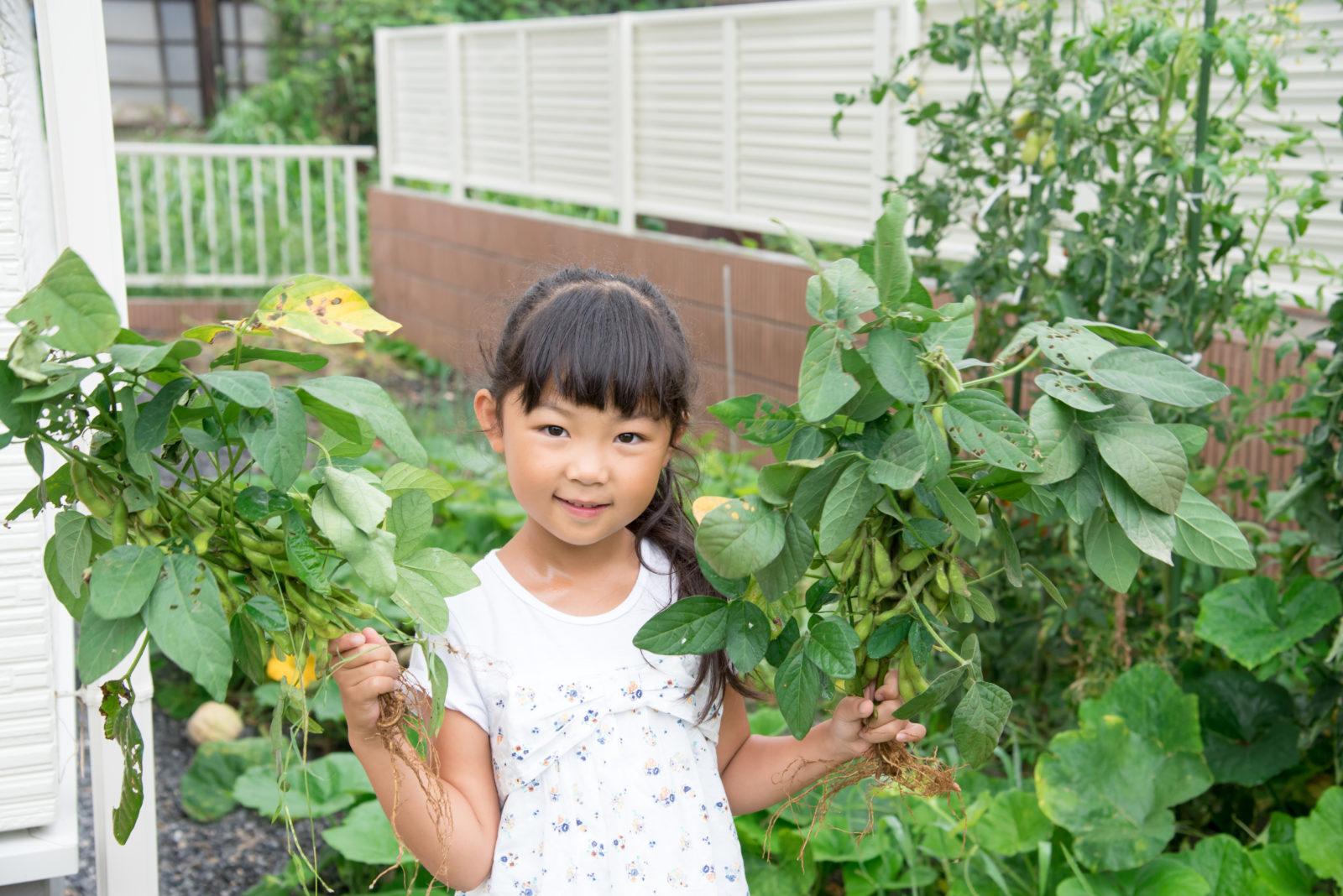 夏バテ防止!夏の風物詩「えだまめ」収穫体験&夏野菜のマルシェ